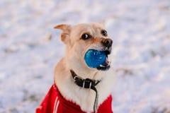 Σκυλί με μια σφαίρα στοκ φωτογραφία με δικαίωμα ελεύθερης χρήσης