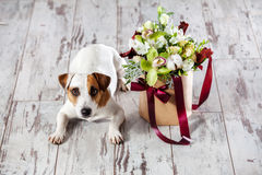 Σκυλί με τα λουλούδια ανθοδεσμών Στοκ Εικόνα