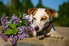 Σκυλί με τα λουλούδια Στοκ φωτογραφία με δικαίωμα ελεύθερης χρήσης