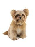 Σκυλί με την απόλαυση στα πόδια Στοκ φωτογραφία με δικαίωμα ελεύθερης χρήσης