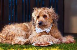 Σκυλί με την πετσέτα γύρω από το λαιμό του που βρίσκεται μπροστά από ένα κύπελλο με τις τηγανίτες Στοκ Φωτογραφίες