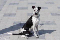 Σκυλί με τη σκιά του ανθρώπου στοκ εικόνες