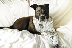 Σκυλί με τη χαλάρωση τοποθέτησης στοκ εικόνα με δικαίωμα ελεύθερης χρήσης