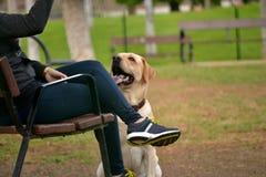 Σκυλί με τον ιδιοκτήτη του Στοκ Φωτογραφία