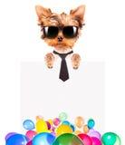 Σκυλί με το έμβλημα διακοπών και τα ζωηρόχρωμα μπαλόνια Στοκ Εικόνες