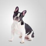 Σκυλί με το αστείο βλέμμα Στοκ εικόνες με δικαίωμα ελεύθερης χρήσης