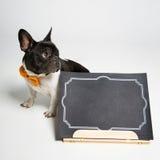 Σκυλί με το βιβλίο Στοκ εικόνα με δικαίωμα ελεύθερης χρήσης