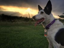 Σκυλί με το ηλιοβασίλεμα βουνών Στοκ Εικόνες