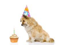 Σκυλί με το καπέλο και το κέικ γενεθλίων η ανασκόπηση απομόνωσε το λευκό Στοκ Φωτογραφία