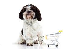 Σκυλί με το καροτσάκι αγορών που απομονώνεται στο άσπρο υπόβαθρο Στοκ Εικόνα