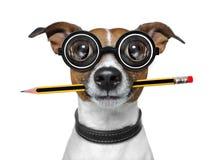 Σκυλί με το μολύβι στο γραφείο Στοκ Εικόνες