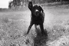 Σκυλί με το νερό Στοκ φωτογραφίες με δικαίωμα ελεύθερης χρήσης