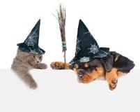Σκυλί με το ραβδί σκουπών μαγισσών και γάτα με τα καπέλα για αποκριές που κρυφοκοιτάζουν από πίσω από τον κενό πίνακα Να κοιτάξει Στοκ Εικόνες