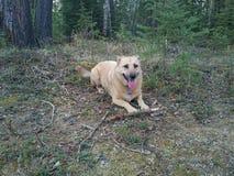 Σκυλί με το ραβδί Στοκ εικόνες με δικαίωμα ελεύθερης χρήσης