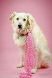 Σκυλί με το ροζ Στοκ εικόνες με δικαίωμα ελεύθερης χρήσης