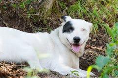 Σκυλί με το χαμόγελο Στοκ Εικόνες