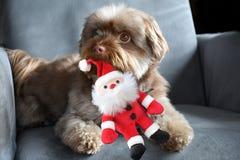 Σκυλί με το santa παιχνιδιών Στοκ εικόνες με δικαίωμα ελεύθερης χρήσης