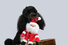 Σκυλί με το santa παιχνιδιών Στοκ Φωτογραφίες