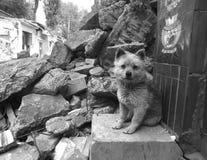 σκυλί μικρό στοκ εικόνα με δικαίωμα ελεύθερης χρήσης