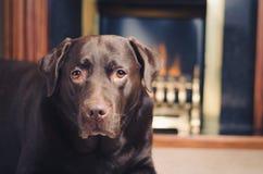 Σκυλί μπροστά από την εστία στοκ φωτογραφία