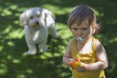 σκυλί μωρών στοκ εικόνες
