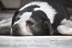 σκυλί νυσταλέο Στοκ φωτογραφία με δικαίωμα ελεύθερης χρήσης