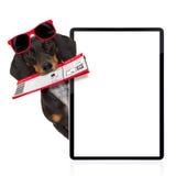 Σκυλί λουκάνικων Dachshund στις διακοπές Στοκ εικόνες με δικαίωμα ελεύθερης χρήσης