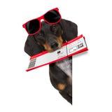 Σκυλί λουκάνικων Dachshund στις διακοπές Στοκ Εικόνα