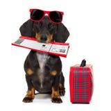 Σκυλί λουκάνικων Dachshund στις διακοπές Στοκ Φωτογραφίες