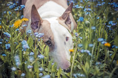 Σκυλί, λουλούδια, λυπημένα Στοκ φωτογραφίες με δικαίωμα ελεύθερης χρήσης