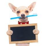 Σκυλί οδοντοβουρτσών Στοκ φωτογραφία με δικαίωμα ελεύθερης χρήσης