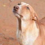 Σκυλί οδών Στοκ Εικόνες