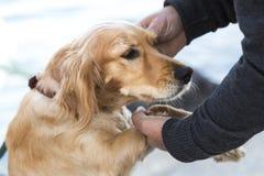 Σκυλί οδών Στοκ φωτογραφίες με δικαίωμα ελεύθερης χρήσης