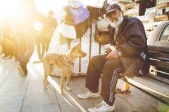 Σκυλί οδών Στοκ Φωτογραφίες