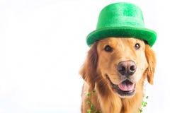 σκυλί Πάτρικ s ST ημέρας Στοκ φωτογραφία με δικαίωμα ελεύθερης χρήσης