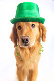 σκυλί Πάτρικ s ST ημέρας Στοκ εικόνες με δικαίωμα ελεύθερης χρήσης