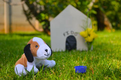 Σκυλί παιχνιδιών με το σπίτι σκυλιών Στοκ Εικόνες
