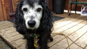 σκυλί παλαιό Στοκ φωτογραφία με δικαίωμα ελεύθερης χρήσης