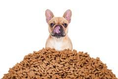 σκυλί πεινασμένο Στοκ εικόνα με δικαίωμα ελεύθερης χρήσης