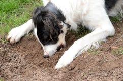 σκυλί πεινασμένο Στοκ Φωτογραφίες