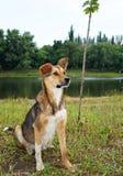 σκυλί πιστό Στοκ Φωτογραφίες