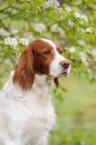 Σκυλί πορτρέτου, κάθετο Στοκ Φωτογραφία