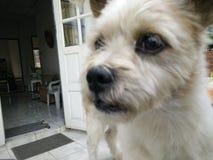 Σκυλί πορτών Στοκ φωτογραφία με δικαίωμα ελεύθερης χρήσης