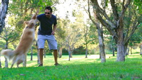 Σκυλί που έχει τη διασκέδαση και που προσκομίζει ένα ραβδί υπαίθρια απόθεμα βίντεο