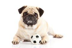 Σκυλί που απομονώνεται στο άσπρο υπόβαθρο, ποδόσφαιρο Σφαίρα Στοκ Εικόνες