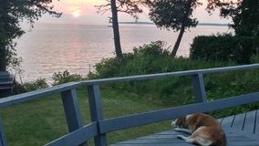 Σκυλί που απολαμβάνει την έναρξη του ηλιοβασιλέματος Στοκ Φωτογραφία