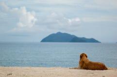 Σκυλί που βρίσκεται στην παραλία ευτυχώς Στοκ εικόνα με δικαίωμα ελεύθερης χρήσης