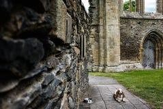 Σκυλί που βρίσκεται στο ruine εκκλησιών Στοκ Εικόνες