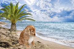 Σκυλί που εγκαταλείπεται στην παραλία Στοκ Εικόνα