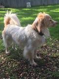 Σκυλί που εξετάζει την απόσταση σε μια ηλιόλουστη ημέρα Στοκ φωτογραφίες με δικαίωμα ελεύθερης χρήσης